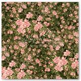 4-verdant-blossoms-frt-PR-copy
