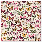 7310444_bb_sweet_clementine_butterflies_paper_front