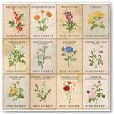 7311097_BB_BotanicalJournal_OSPaper_Garden_Front